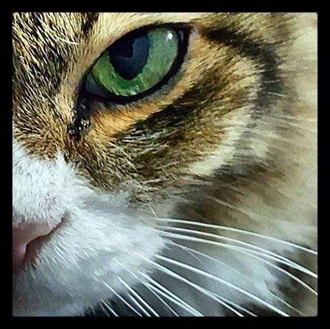 Tico's fierce look...