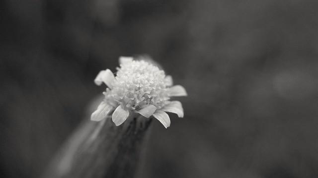 la vida en blanco y negro (p6)