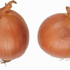 onions-0139