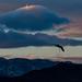 Lone crane at dusk by kfpsardou