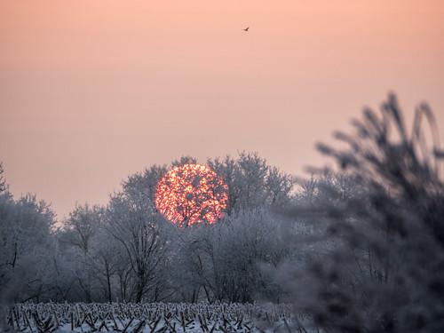 winter sunset ice nature germany fire natur olympus 300mm 75300mm northern sonne sonnenaufgang norddeutschland niedersachsen ohz osterholzscharmbeck mzuiko ohlenstedt omdem5markii