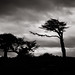 Wind-Swept Trees by ep_jhu