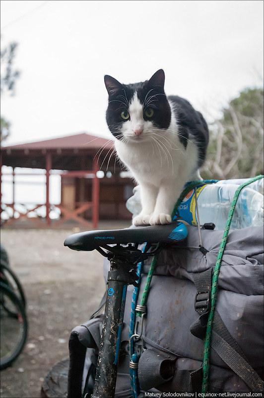 Кот залез на седло
