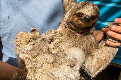 Mom Sloth