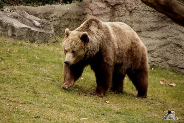 Zoo Berlin 18.03.2016  013