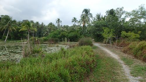 Kampung trail at Pulau Ubin