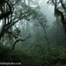 The Yungas Jungle by portaldepiedra