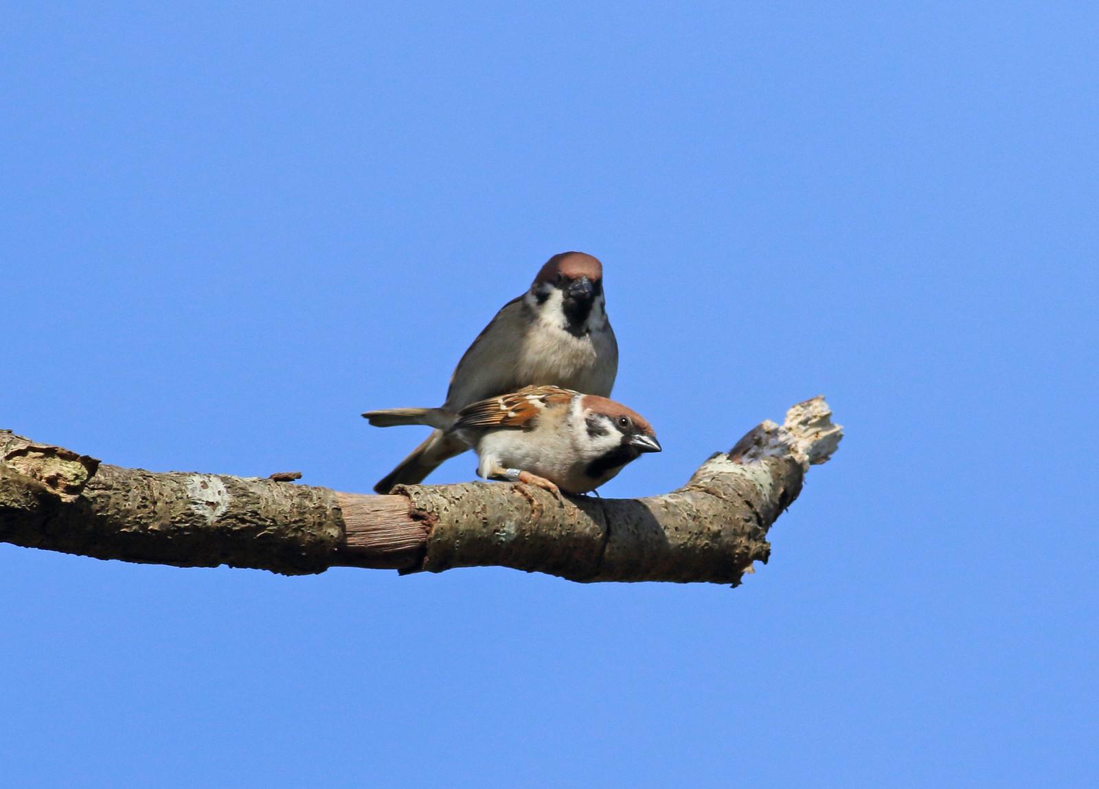sparrowsetc0043 copy