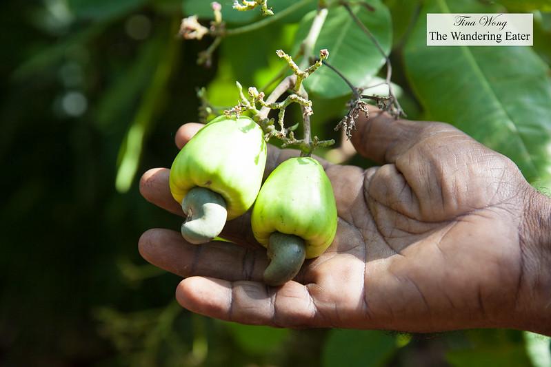 Nut eater 2 - 1 2