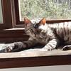 George enjoys a sunny spot. #catsofinstagram #georgethecat