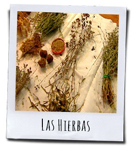 De gedroogde kruiden werden gebruikt voor het brouwen van de heilzame medicijnen