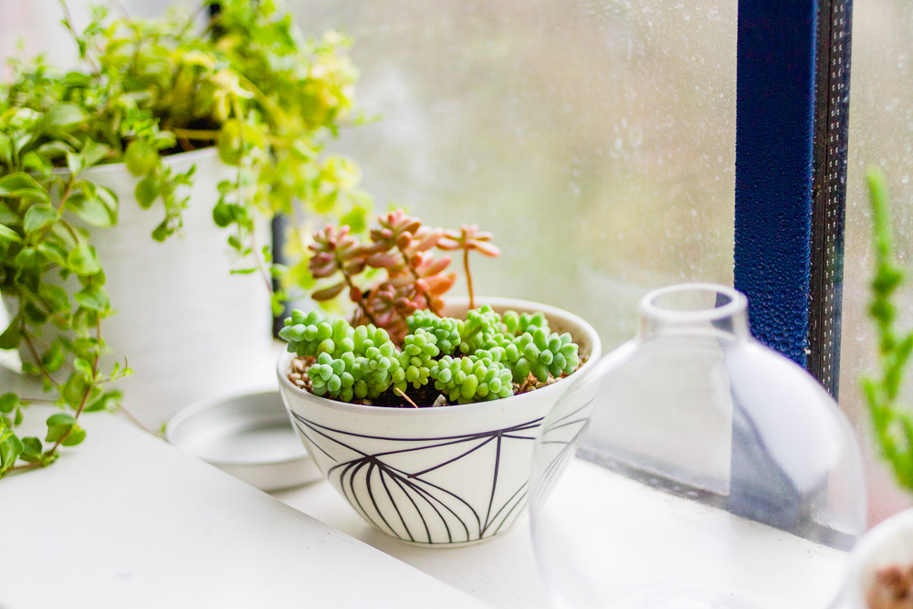cute plant pot with succulents windowsill