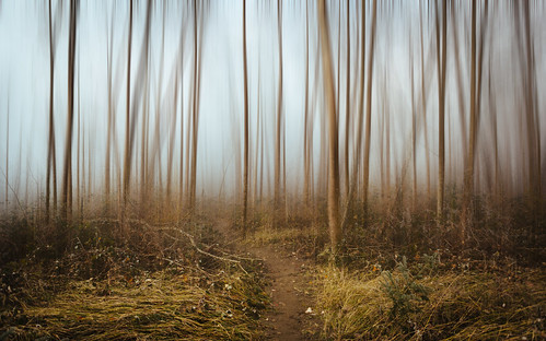 forest nature path blur trees carnation pacificnorthwest canoneos5dmarkiii canonef2470mmf28lusm fog foggy johnwestrock washington