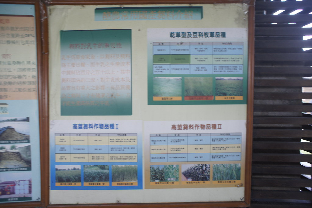 台南市柳營乳牛的家 (16)