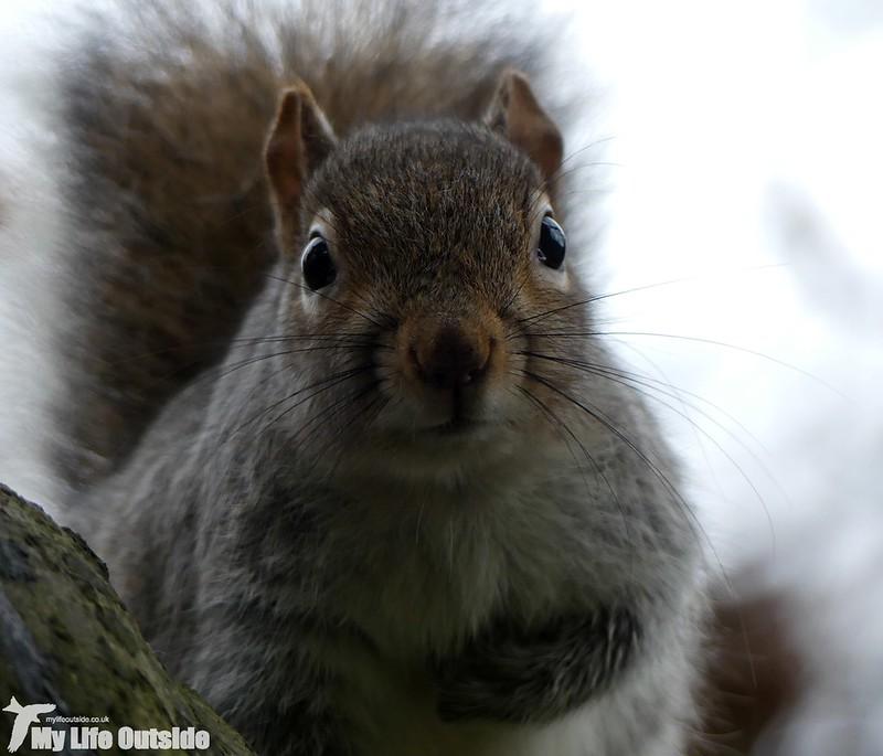 P1000061 - Squirrel, Ynys-Hir
