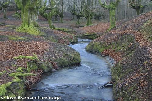 Parque Natural de Gorbeia  #DePaseoConLarri #Flickr -3052