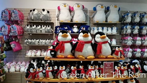 Penguin Parade: Philip Island Day Tour – Part 3 | Green After the Rain