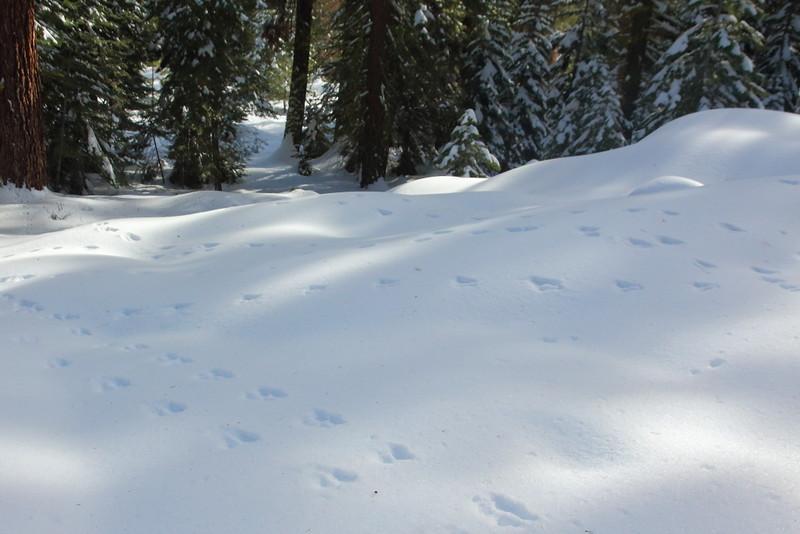 IMG_5578 Animal Tracks