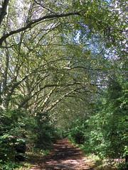 GOC Walthamstow to Stratford 131: Wick Wood, Hackney