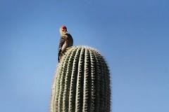 Throwback Thursday - Arizona