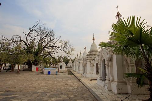 Startree and satellite pagodas