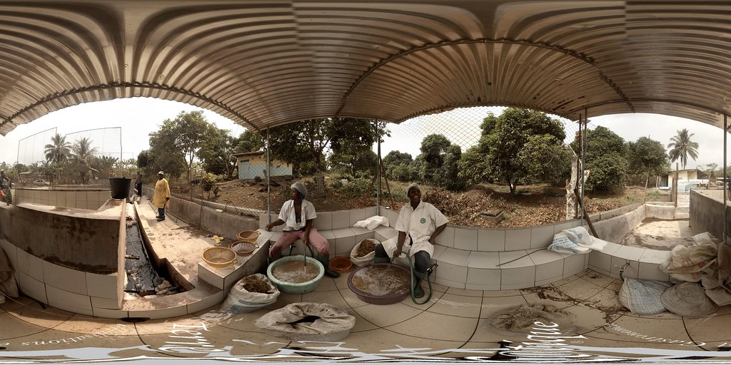 Lavage du poivre de Penja