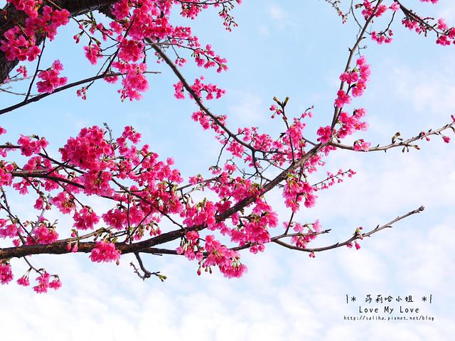 台北西門町一日遊景點推薦西本願寺古蹟 (4)