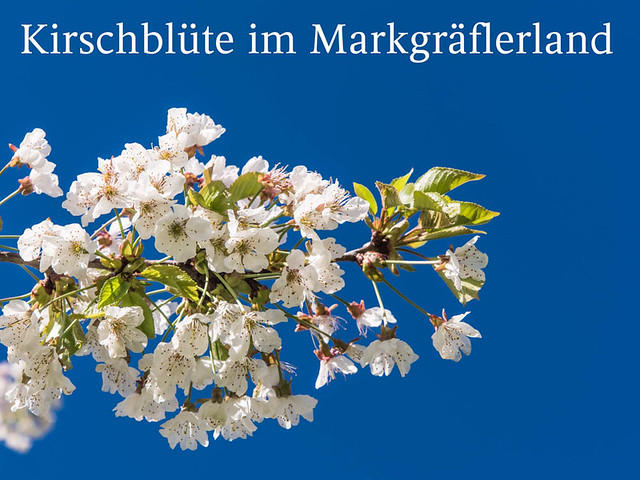 Kirschblüte_2016_044
