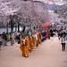 The Line in the Path of Sakura