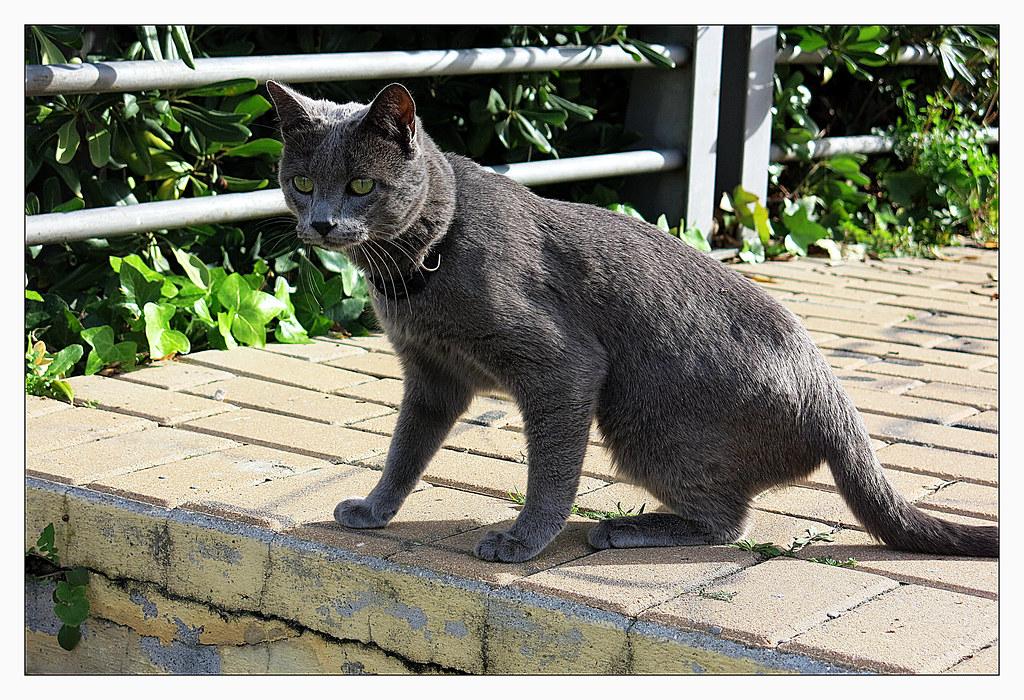 un gato al acecho