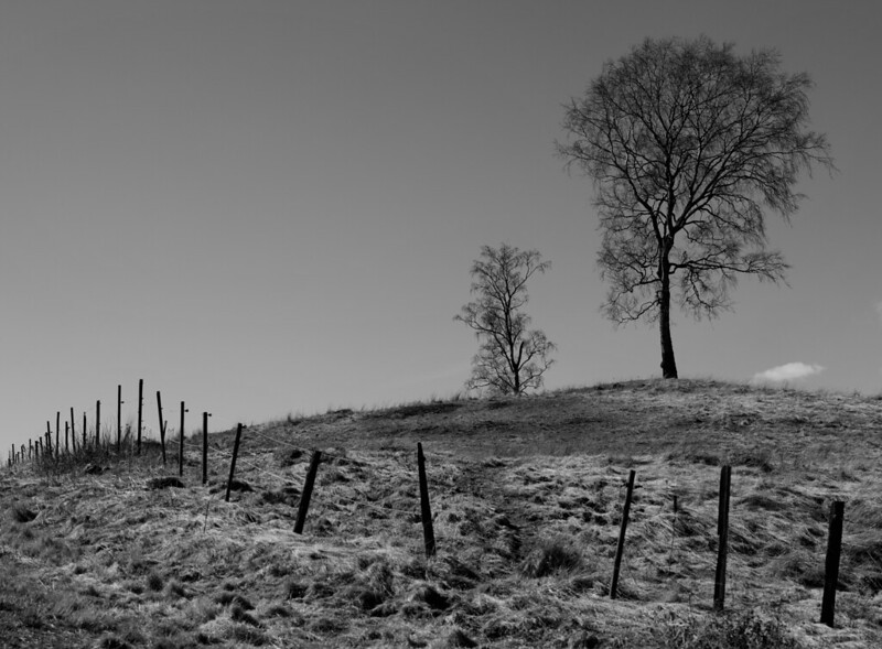 Monochrome Hillside