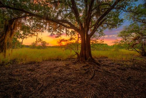 park sunset tree river moss oak state florida explore spanish hdr myakka