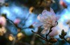 Mad for Magnolias_8207