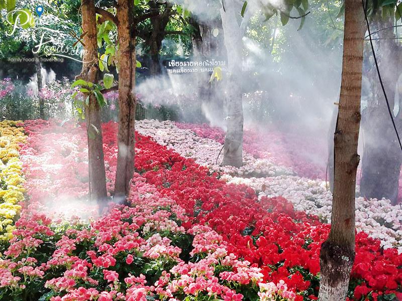 tulip farm in thailand Suan Tung Lae Khom Chiang Rai Park