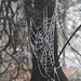 Frosted web by PeterZenger