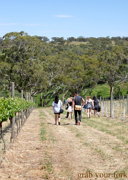 Vineyard tour at Primo Estate for Tasting Australia 2016