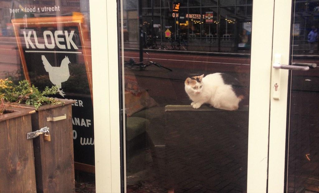 kloek kat | having just spotted my dog | alison netsel | flickr