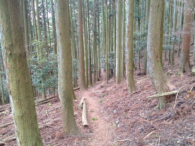 入道ヶ岳 井戸谷 登山道