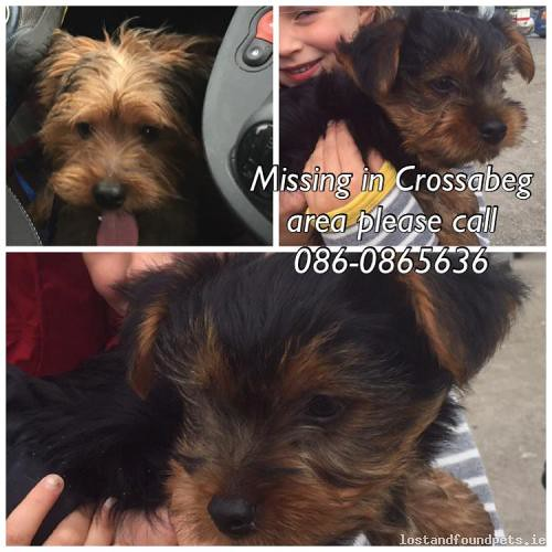 Wed, Mar 9th, 2016 Lost Male Dog - The Local Area, Crossabeg, Wexford