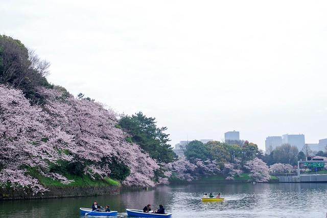 2016/04/03千鳥ヶ淵-45