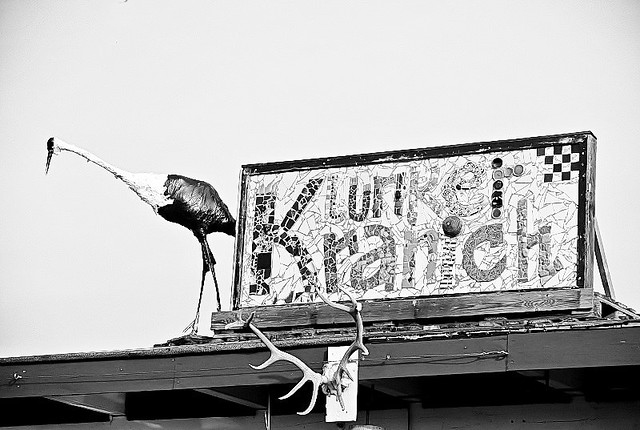 Klunkerkranich_2015-1_
