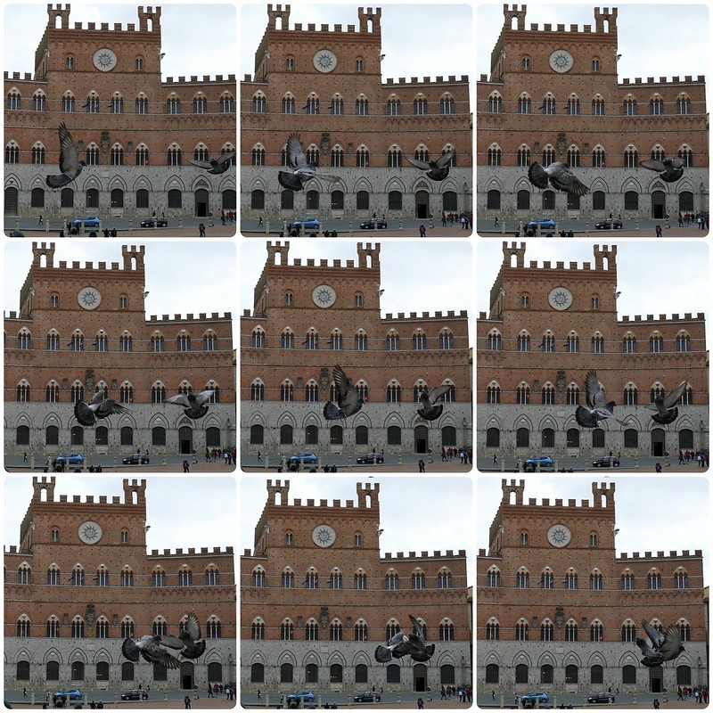 Italian pigeon matrix in nine stages