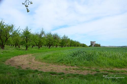 Le verger et le vieux moulin