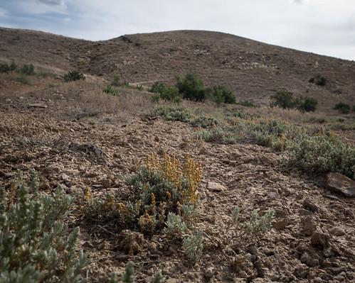 colorado vignette lightroom atriplex chenopodiaceae wfgna deltacountyco lightroompresets sidewindertrail april2016 sonyrx100m2 westernslopeco gunnisongorgenationalconservationareaco sidewindertrailggncaco