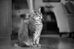 Cat, Gato, Chat, 猫, Katze