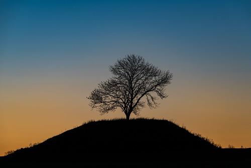 morning copyright tree nature field grass silhouette composition sunrise landscape dawn early nikon sweden outdoor tripod hill perspective sverige scandinavia tamron linköping telezoom östergötland d810 sättuna nordiclandscape 150600mm tamronsp150600mm jarnasen järnåsen