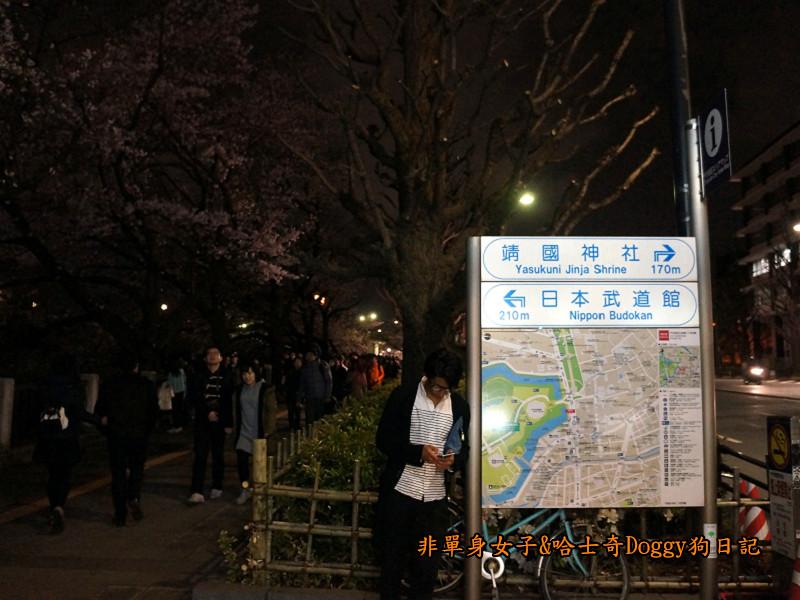 日本東京北之丸公園千鳥之淵賞夜櫻花02
