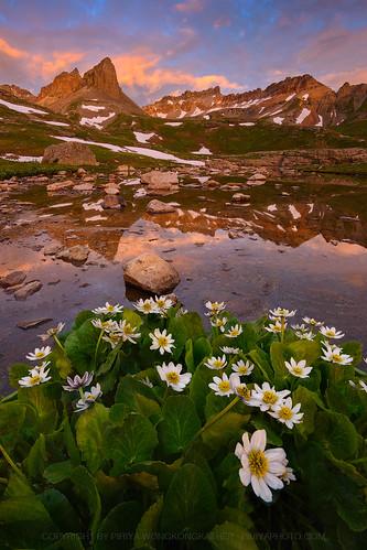 lake ice sunrise colorado basin wildflower