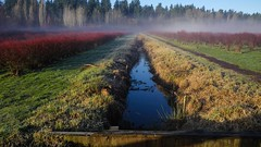 Blueberry fields, irrigation ditch