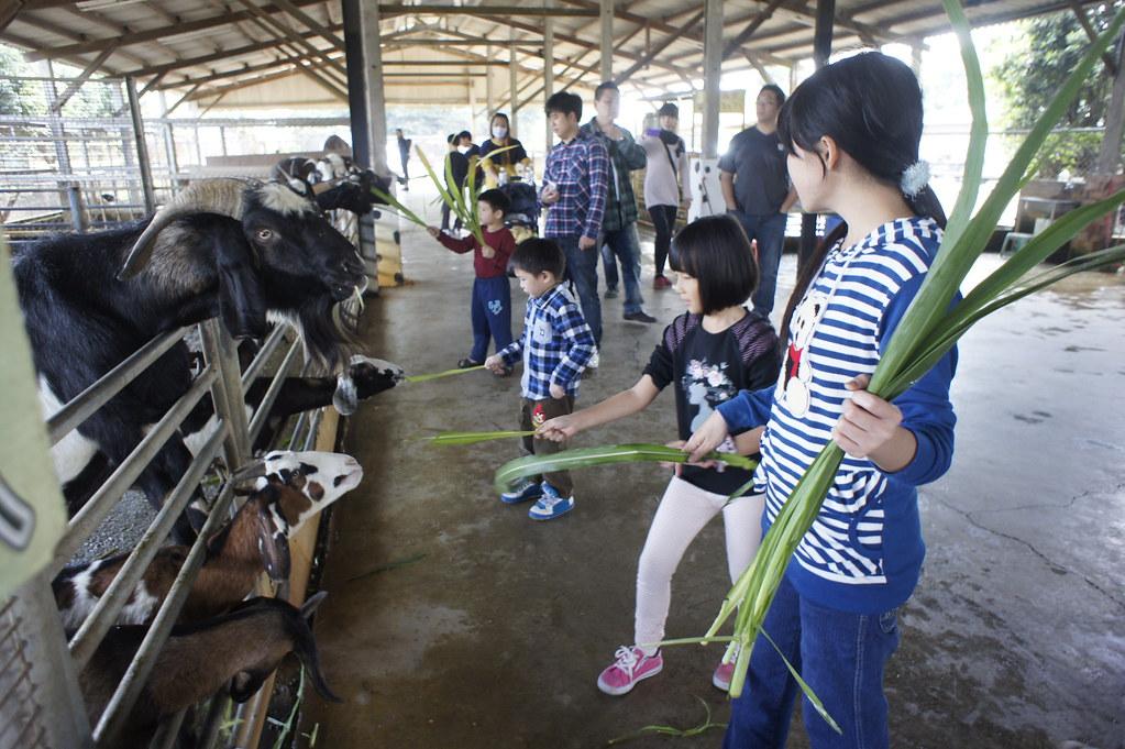 台南市柳營乳牛的家 (41)